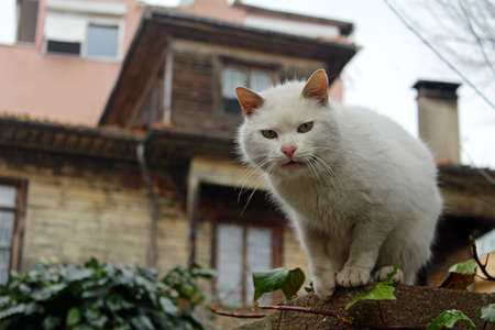 istanbul: Cute Cat in Istanbul, Turkey. Stock Photo
