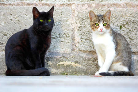 Cute Cats in Istanbul, Turkey.