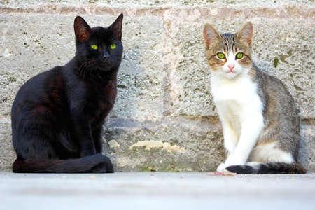 housecat: Cute Cats in Istanbul, Turkey.