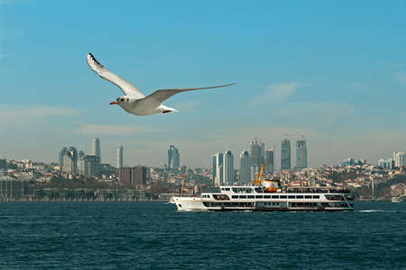 Sea Gulls on the Bosphorus in Istanbul, Turkey.