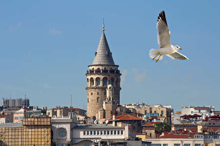 Seagull on the Galata Tower in Istanbul, Turkey.