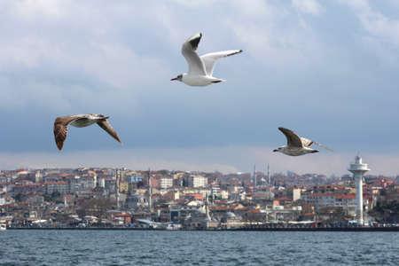Sea Gulls on the Bosphorus in Istanbul, Turkey.