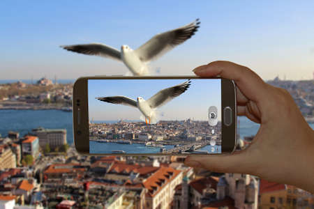 Seagull flying on Historical Galata Tower in Istanbul, Turkey. 版權商用圖片