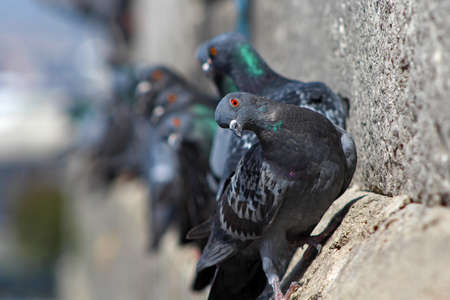 Cute Pigeons on New Mosque in Istanbul, Turkey.