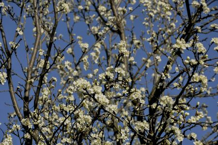 springtime: Springtime flowers