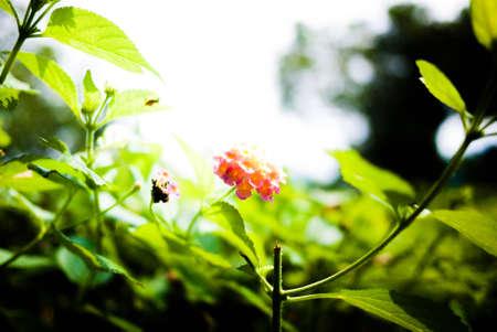 стиль жизни: цветы
