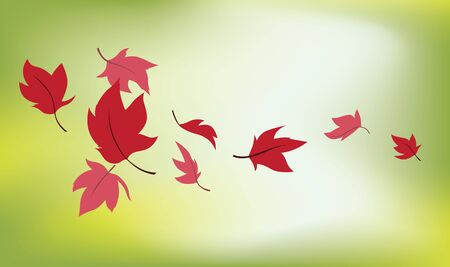 fall images: Images of leaves on fall with blur background