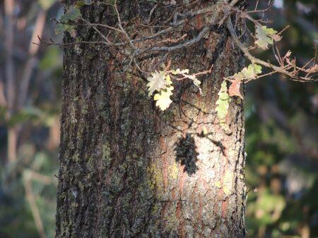 leafs: Sun on leafs