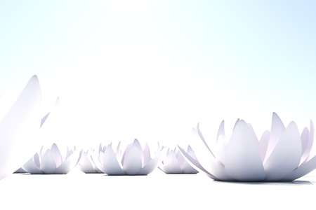 A lot of zen loto flowers on white background
