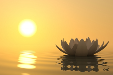 Zen flower lotus into the water with sunset on background Stock Photo