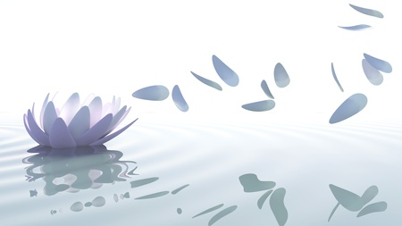 Zen loto flower in water with purple and pink petals moved by wind on white background 스톡 콘텐츠