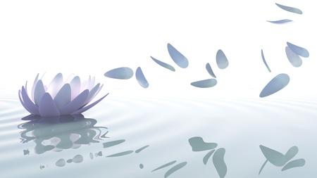 흰색 배경에 바람에 의해 이동 보라색과 분홍색 꽃잎 물에 선 LOTO 꽃