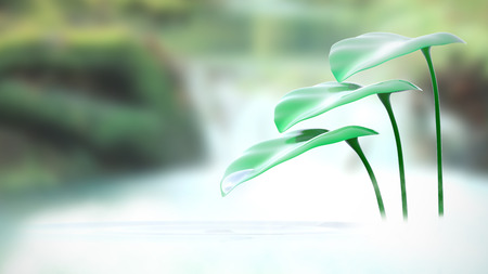 Plant in water with a natural green background