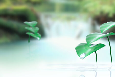 Plants in water with a natural green background Banco de Imagens