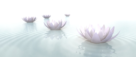 zen garden: Zen lotus flowers in water with ripples on blurred background