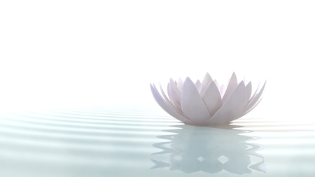 'peace of mind': Zen lotus flower in water illuminated by daylight on white background