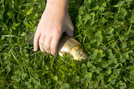 hobbyist: Fish on the grass