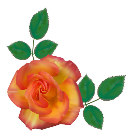 Very beautiful rose with green leafs. Vector illustration. Vector