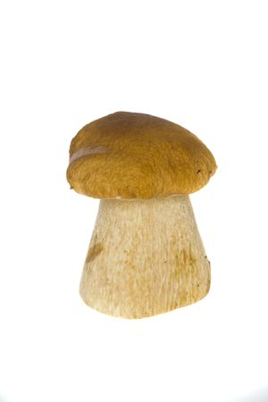 fungous: One cep on a white background Stock Photo