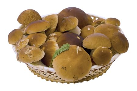 fungoid: It is a lot of ceps on a white background