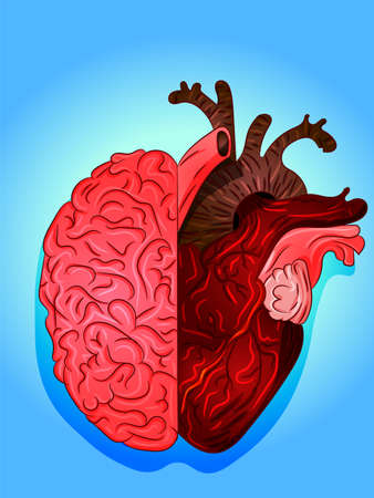 Heart and brain art illustration. Vector, drawing in science, biology or psychology. Blood, cells, human body. Thinking versus feeling. Organs interconected, neurology, medicine, health intellect.