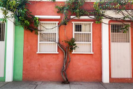 casa colonial: Árbol que crece en la pared de una casa naranja en el barrio Getsemani de Cartagena, Colombia.