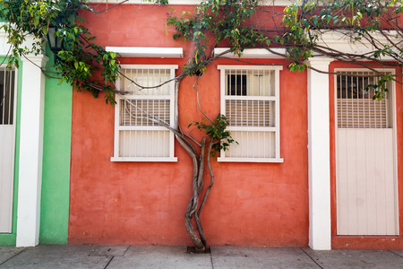 Tree growing up the wall of an orange house in the Getsemani neighborhood of Cartagena, Colombia. Stock Photo