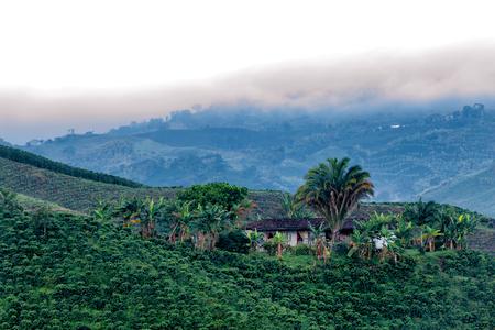 マニサレス、コロンビアに近い光の夜明けのコーヒー農園の美しい景色。