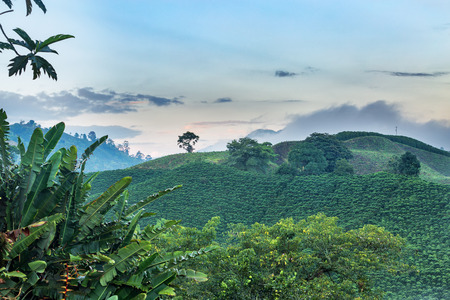 Dawn light shows the beautiful green splendor of Colombia's coffee triangle