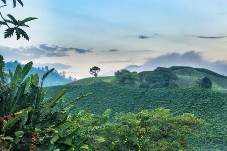 Dawn light shows the beautiful green splendor of Colombias coffee triangle