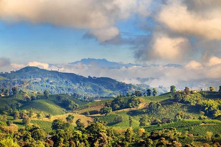 Mening van een Koffieaanplanting dichtbij Manizales in de Koffiedriehoek van Colombia met Nevado del Ruiz op de achtergrond. Stockfoto