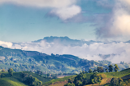 nevado: Early morning blue light hits a Coffee plantation near Manizales in the Coffee Triangle of Colombia with the Nevado del Ruiz Volcanoe in the background. Stock Photo