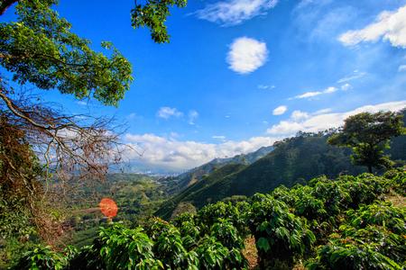 Bel cielo blu sopra una piantagione di caffè nel triangolo del caffè della Colombia. Archivio Fotografico - 77087681