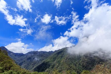 Vista granangular de las nubes que ruedan lentamente en el bosque de la nube cerca del parque nacional de Los Nevados fuera de Salento, Colombia.