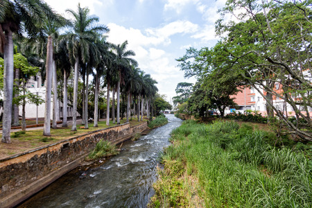 Palms along the Rio Cali in downtown Cali, Colombia. Stock Photo