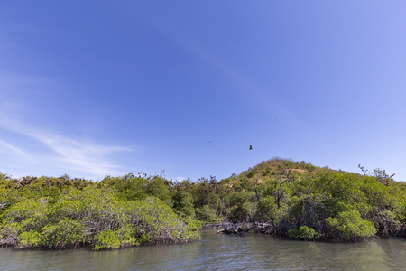 Bats at the Seventeen Island National Park in Flores, Indonesia. Imagens