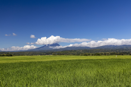 A beatufiul view of a green rice field with Ebulobo volcano in the distance in East Nusa Tenggara, Indonesia. Stock Photo