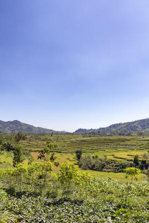 Portrait view of terraced rice fields near Ruteng, Indonesia. Stockfoto