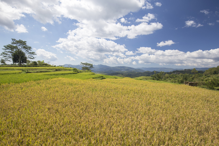 Terraced Golo Cador rice fields near Ruteng in Flores, Indonesia.
