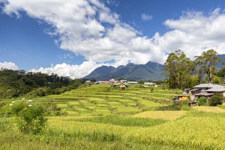 Terraced rice fields and Poco Mandasawu, Flores highest peak.