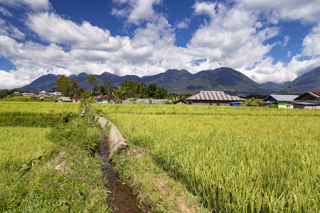 Small cement water ditch for rice fields at the Golo Cador Rice Terraces in Ruteng on Flores, Indonesia. 免版税图像