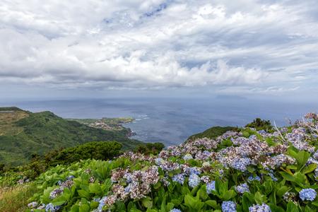 Über Ponta Delgada auf der Azoreninsel Flores blühen die Hydrangea-Blumen. Standard-Bild