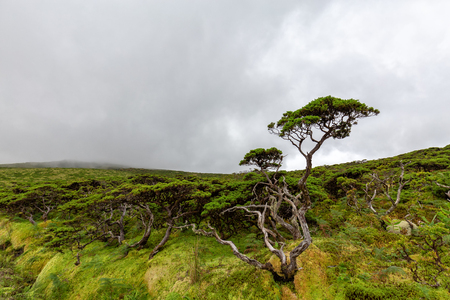 Unique Azores ecosystem on Flores island in the Azores, Portugal.