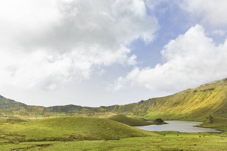 Cattle grazing in the amazing basin of the Corvo Crater on the island of Corvo in the Azores, Portugal. Banco de Imagens