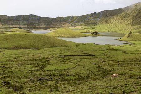 Cows graze inside the Corvo Crater on the island of Corvo in the Azores, Portugal.
