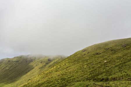 Mist hangs low over a grazing cow on the rim of the Caldera on the island of Corvo in the Azores, Portugal.