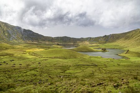 Cattle grazing in the distance in the Corvo Crater on the island of Corvo in the Azores, Portugal. Banco de Imagens