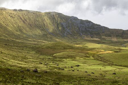 Cattle grazing among the splendor of the Corvo Crater on the island of Corvo in the Azores, Portugal. Banco de Imagens