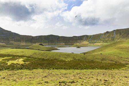 Beautiful bird floats above the emerald green basin of the Corvo caldera on the island of Corvo in the Azores, Portugal.