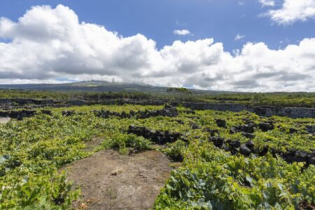Clouds dot the horizon over a vineyard on Pico island in the Azores, Portugal.